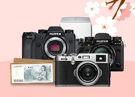 2019 봄소식을 남겨보자!! X-series &GFX로 스르륵~