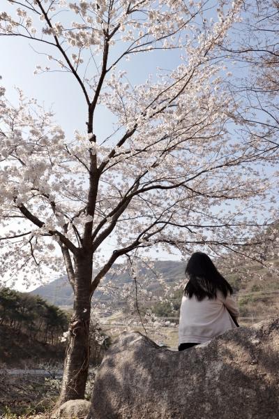 봄 바람 불어온다