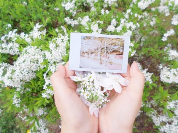 꽃x인스탁스=봄