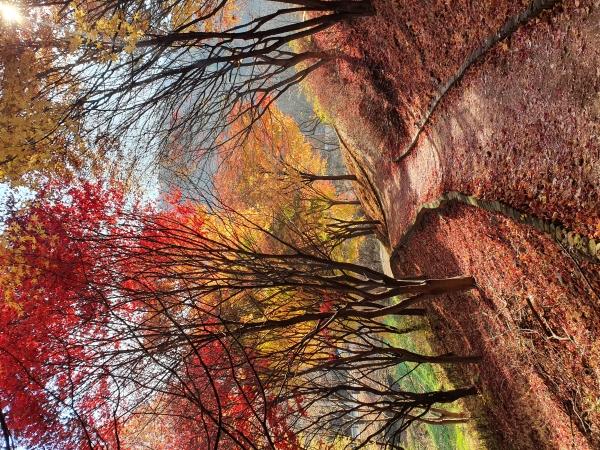 남한산 가을 단풍 물든 길