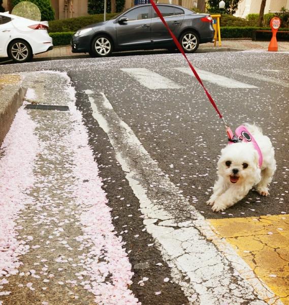 봄엔 역시 산책이쥬~