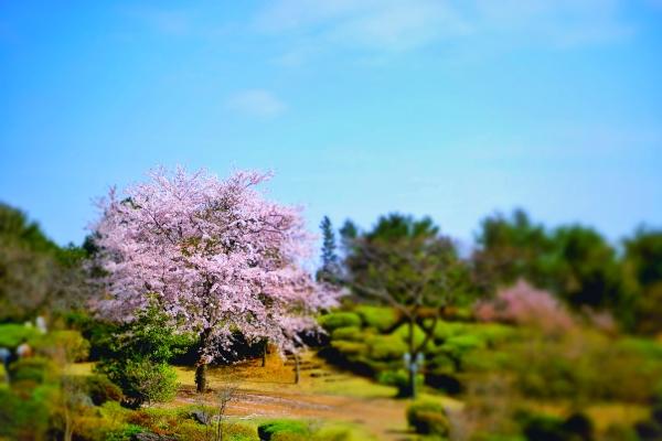 벚나무 미니어처
