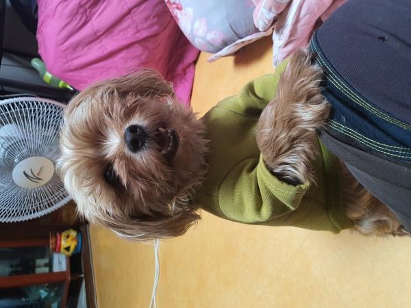 강아지 '우리'와 함께 즐거운 집콕 취미생활!