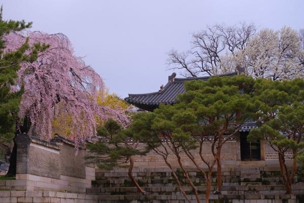 꽃이 흐드러지는 봄