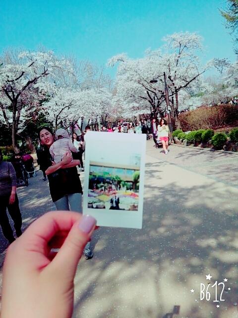 작년에 갔던 벚꽃놀이~