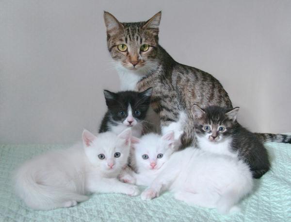 가족의 가족사진