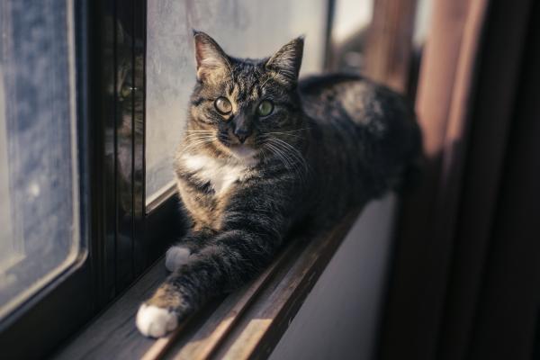 고양이 사진 올립니당 :-)