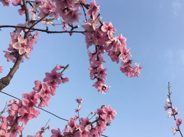 우리집 마당에도 봄이 왔나봄