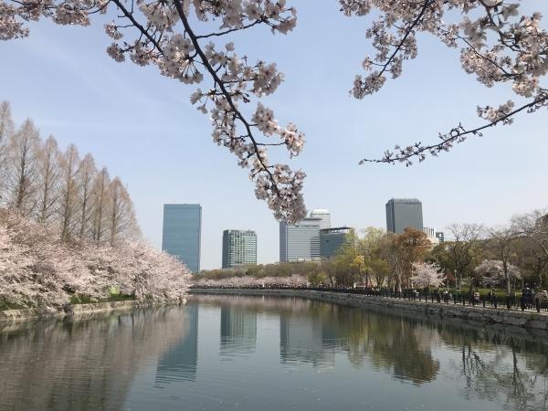 '19 오사카 벚꽃축제
