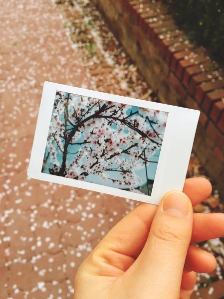작년 봄꽃과 올해의 봄꽃